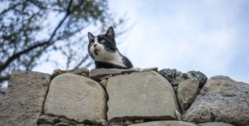 cat feline stray