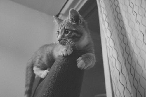 cat kitten orange