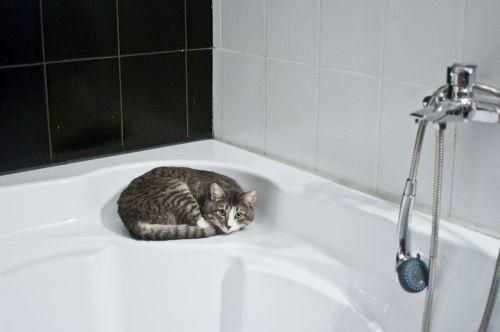 cat bathroom shower head