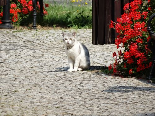 cat animals charming