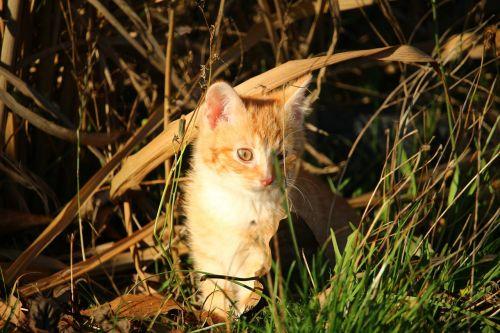 cat kitten cat baby