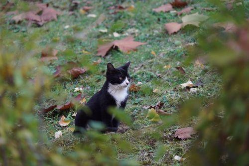 cat stare is god