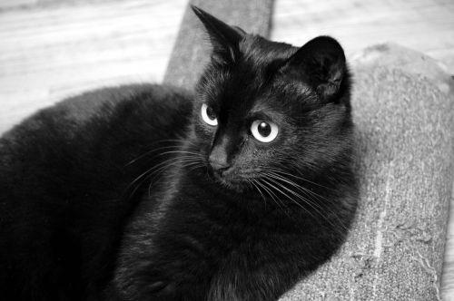 cat black cat view
