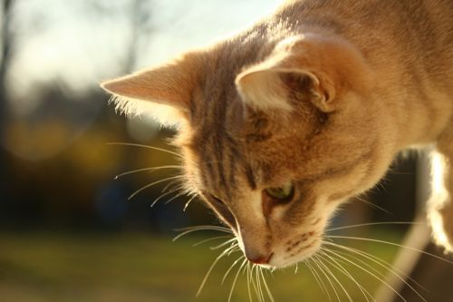 cat mackerel window