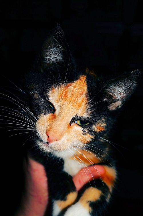 cat cat face cat's eyes