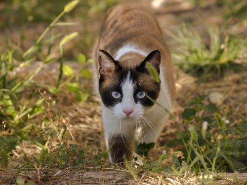 cat animals domestic cat