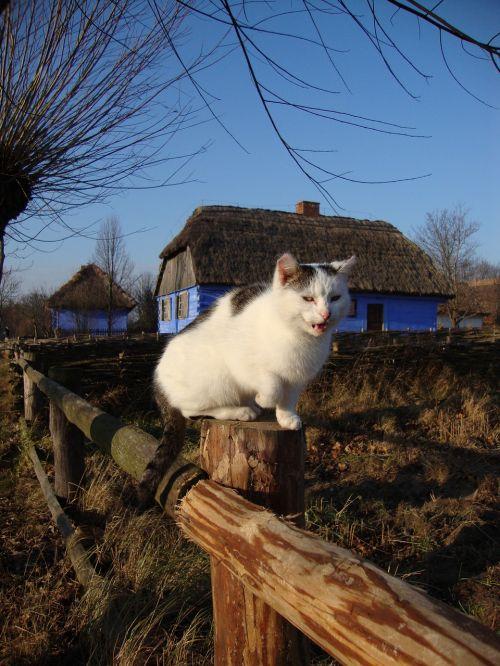 cat animal freedom