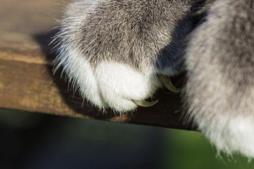 cat paw claw
