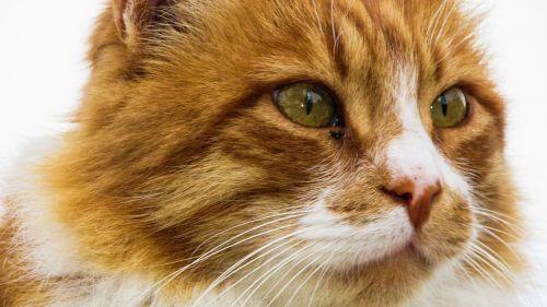 cat eyes mammal