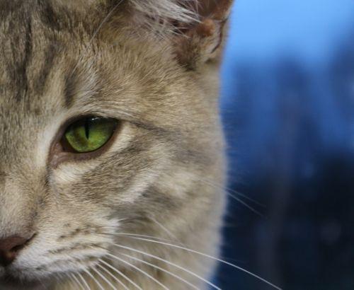 cat cat's eye mackerel