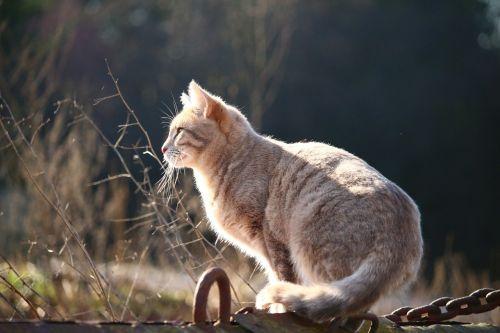 cat kitten mackerel