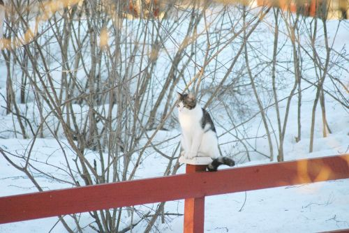 cat fence winter