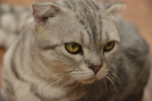 cat cute clean