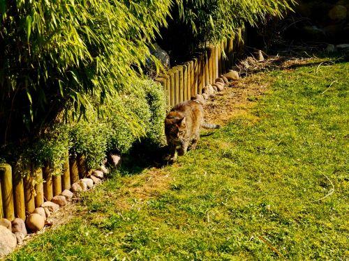 cat wildcat animal