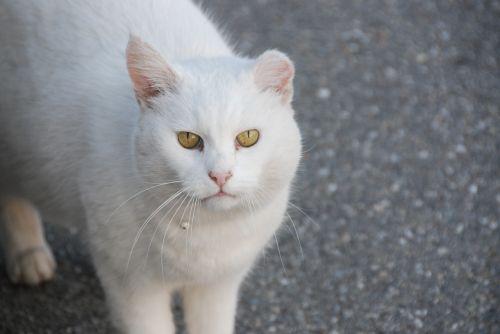 cat white view