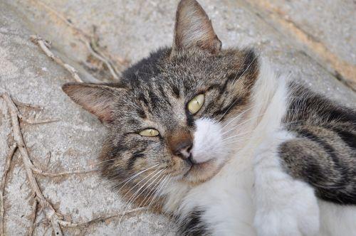 cat cat's eyes eyes
