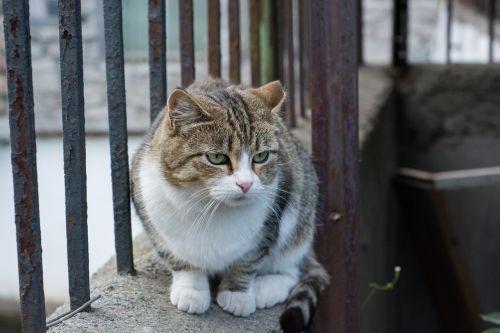 cat lies sorrow