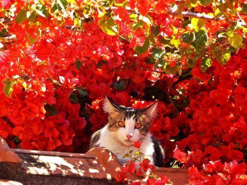 cat feline flowers