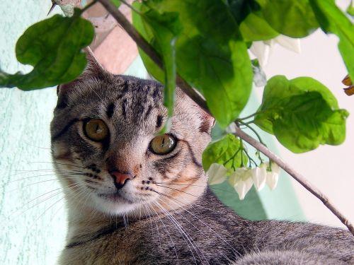 cat feline bugs