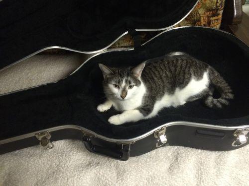 cat guitar case animal