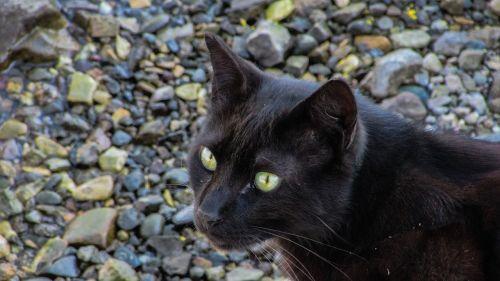 cat stray homeless