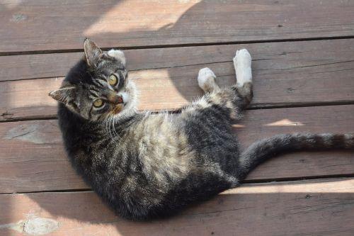 cat feline cute