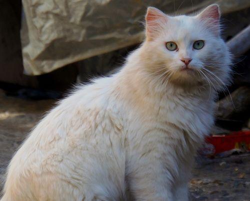 cat feline whiskers