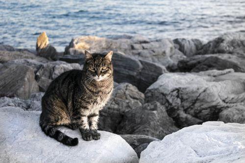 cat look pet