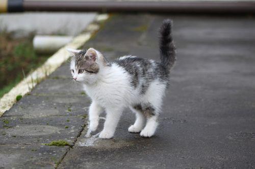 cat kitten small cat