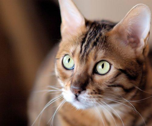 cat eyes pupil