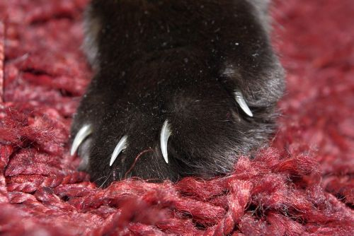 cat paw cat's paw
