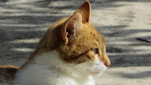cat stray cute