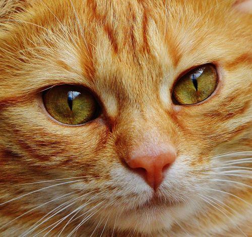 cat face close
