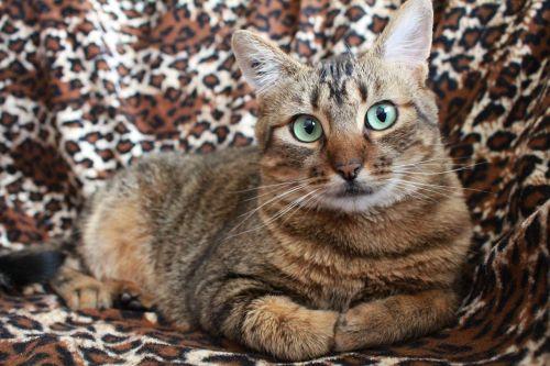 cat grey cat pet