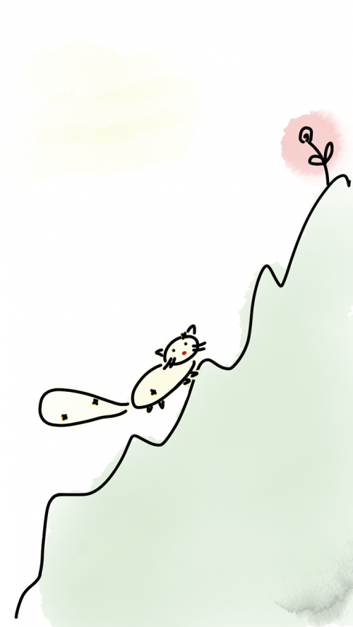 cat mountain flower