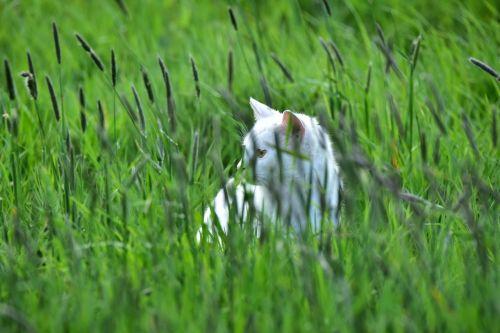 cat grass green