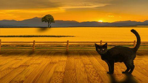 cat landscape sunset