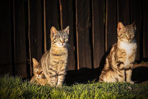 cats roof top cat pet
