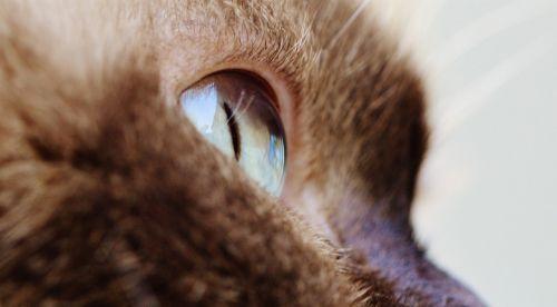 cat eye close