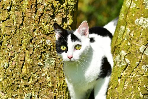 cat,tree,young cat,climb,kitten,nature,domestic cat,pet,felidae,cat in the tree,in the free,curious