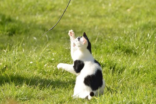 cat,young,domestic cat,pet,animal,sweet,nature,curious,play,cute,funny,kitten