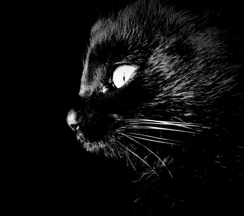 cat intrigue darkness