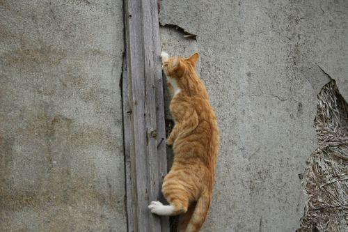 cat kitten aviary
