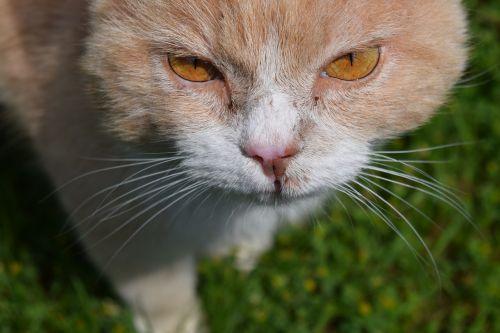 cat view close