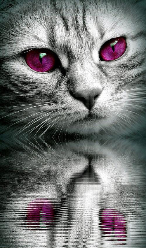 cat face mirroring