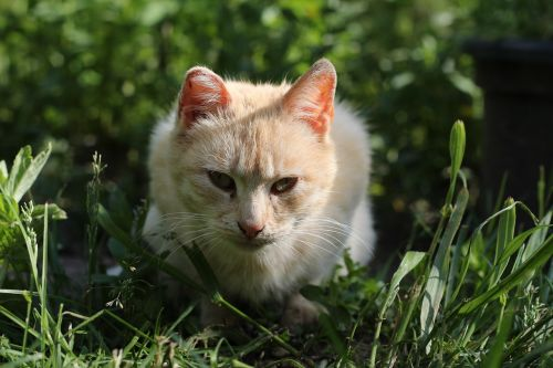 cat dacha cats