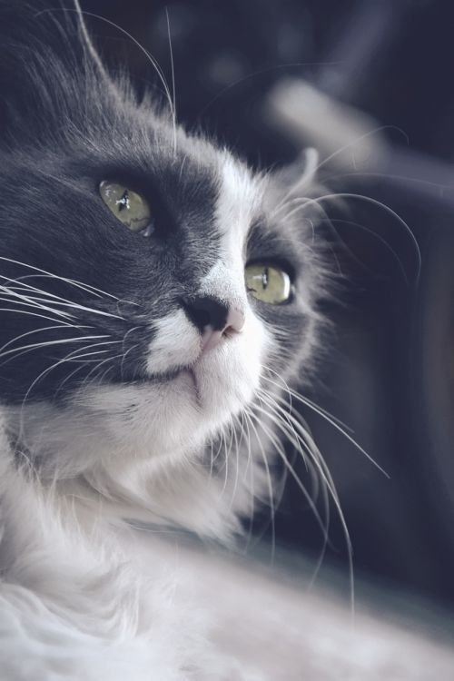 cat speck green eyes