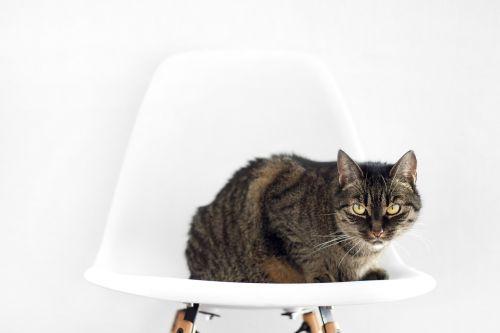 cat chair sit