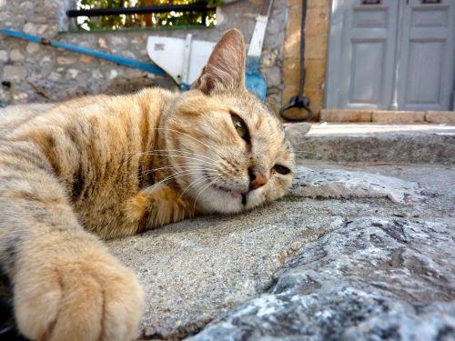 katė,Graikija,Atsipalaiduoti,miegoti,atsipalaiduoti,Siesta,po pietų poilsio