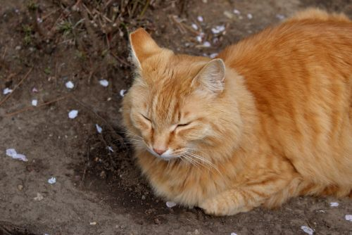 cat red cat animal